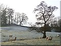 NY5435 : Pasture, Great Salkeld by Andrew Smith