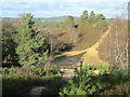 SU8841 : Crossroads of paths on Hankley Common by Peter S