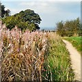 SJ9693 : Werneth Low Country Park by Gerald England