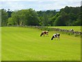 NY6032 : Pasture, Skirwith, Culgaith by Andrew Smith