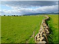 NY6232 : Pasture, Skirwith, Culgaith by Andrew Smith