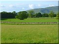NY6233 : Pasture, Skirwith, Culgaith by Andrew Smith