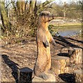 SD5229 : Otter Carving, Higher Penwortham by David Dixon