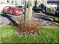 ST8622 : Snowdrops a week early for the festival next week by Alex McGregor