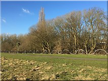 SJ8545 : Newcastle-under-Lyme: Lyme Valley Park by Jonathan Hutchins