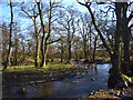NY6531 : Crowdundle Beck and woodland, Milburn by Andrew Smith