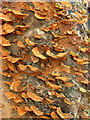 TR0062 : Fungus at Oare Gunpowder Works Country Park by pam fray