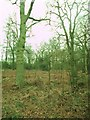 SP3075 : Westwood Heath, nature reserve by Mike Faherty