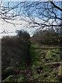 NU1733 : Public bridleway west of Burton by Graham Robson