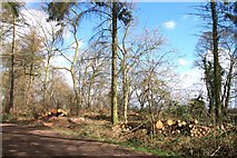 TF0820 : Timber production in Bourne Wood, Lincolnshire by Rex Needle