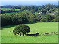 NY5555 : Pasture, Castle Carrock by Andrew Smith