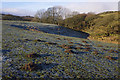 SD5561 : Rough grazing, Littledale by Ian Taylor