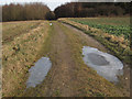 TF7721 : Footpath near Great Massingham, towards Fieldbarn Plantation by Andy Parrett