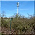 SK4813 : Communications mast next to the M1 motorway by Mat Fascione