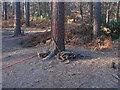 SU8661 : Military debris by Alan Hunt
