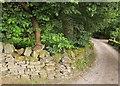 SE0629 : Cat, Stod Fold Farm by Derek Harper