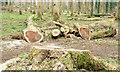 J3370 : Felled trees, Moreland's Meadow, Belfast (February 2015) by Albert Bridge