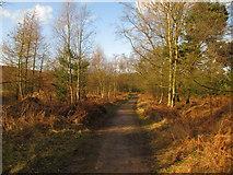 SK0414 : Beaudesert Old Park by Matthew Chadwick