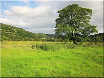 SE0927 : Tree by Calderdale Way by Derek Harper