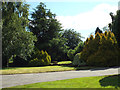 SP0472 : Mature conifers in a front garden, Rowney Green by Robin Stott