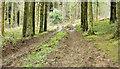J4477 : Muddy path, Cairn Wood, Craigantlet (February 2015) by Albert Bridge