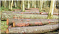 J4477 : Felled trees, Cairn Wood, Craigantlet - February 2015(3) by Albert Bridge