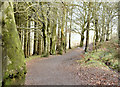 J4577 : Path, Cairn Wood, Craigantlet (February 2015) by Albert Bridge