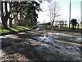 TL8295 : Ashburton Road on Furze Heath, by Adrian S Pye