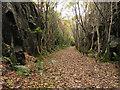 NM9744 : Old railway cutting, Glen Creran by Trevor Littlewood