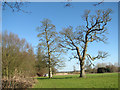 TG1602 : Cricket ground at Ketteringham Hall by Evelyn Simak