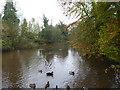ST0012 : Halberton mill pond by Rod Allday