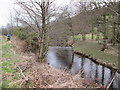 SE9590 : River  Derwent  west  of  Hackness by Martin Dawes