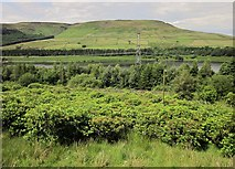 SK0697 : Rhododendrons by the Pennine Way by Derek Harper