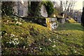 NC8300 : Snowdrops in St. Andrew's Churchyard, Golspie by Andrew Tryon