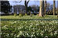 NC8500 : Scottish Snowdrop Festival 2015 - Dunrobin Castle Gardens (4) by Andrew Tryon