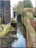 TL8422 : Back Ditch, Coggeshall by Robin Webster