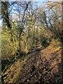 SX8353 : Bridleway, Capton Wood by Derek Harper
