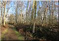 TL1990 : Path through Holme Fen by Hugh Venables