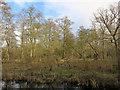 TL2284 : Woodwalton Fen by Hugh Venables