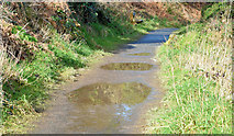 J4772 : Path and puddles, Scrabo, Newtownards (February 2015) by Albert Bridge