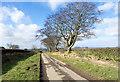 NZ1822 : Three trees alongside Stobhill Lane by Trevor Littlewood