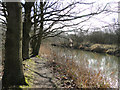 TG2521 : Footpath along the River Bure by Adrian S Pye