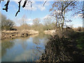 TG2521 : The River Bure from the footpath by Adrian S Pye
