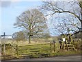 NZ0882 : Permissive path, Bolam Parks by Oliver Dixon