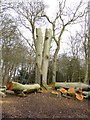 NZ0882 : Felled tree at Bolam Lake Country Park by Oliver Dixon