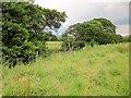 SK1483 : Trees along Odin Sitch by Derek Harper