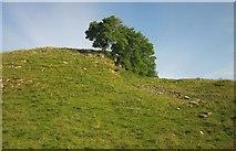 SK1482 : Trees above Cave Dale by Derek Harper