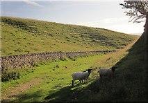 SK1482 : Sheep, Cave Dale by Derek Harper