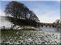 H4377 : Wintry along the Strule riverbank by Kenneth  Allen