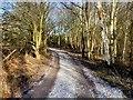 SJ8280 : Bridleway Around Rossmere by David Dixon